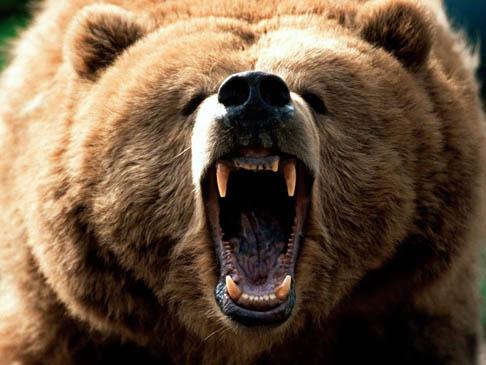 Bye); Bear2